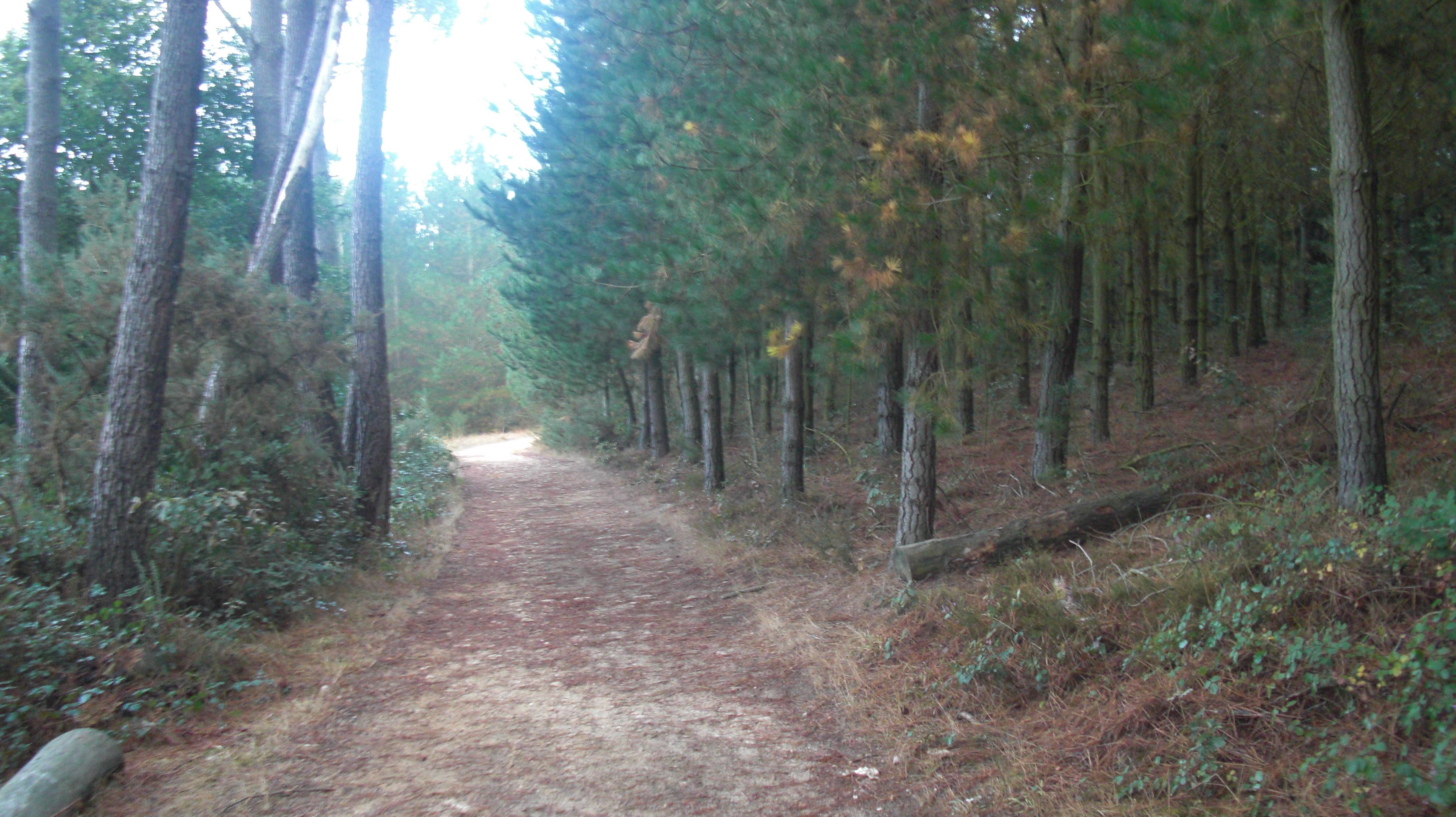 30.- PORTOMARIN-PALAS DE REI  (25 km)
